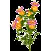 Flower - Pozostałe -