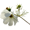 Flower Plants White - Pflanzen -
