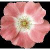 Flower Plants Pink - 植物 -