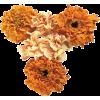 Flower Plants Orange - Plantas -