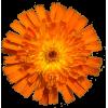 Flower Plants Orange - 植物 -