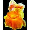 Flower Plants Orange - Plants -