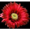 Flower Plants Red - 植物 -