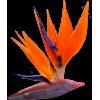 Flower Colorful - Biljke -
