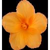 Flower Yellow - Biljke -