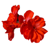 Flower Red - Plants -