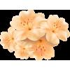 Flower Beige - Plants -