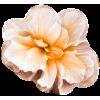 Flower - Frames -