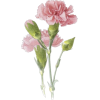 Flower - Illustrations -