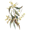 Flower - Illustraciones -