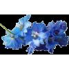 Flower - Piante -