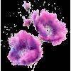 Flower - Pflanzen -