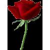 Flower - Uncategorized -