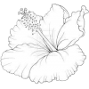 Flower drawing - Illustrations -