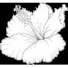 Flower drawing - Ilustracje -