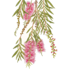 Flower, leaves, pink - 植物 -