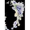 Flowers  Blue - Pflanzen -
