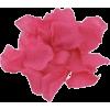 Flowers Petals - 植物 -
