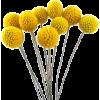 Flowers Yellow - Plantas -