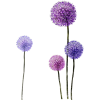 Flowers - Illustraciones -