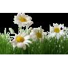 Flowers - 插图 -