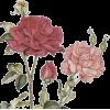 Flowers - Ilustracije -