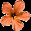 Flowers - Przedmioty -