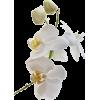 Flowers - Natur -