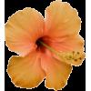 Flowers - Natureza -