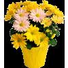 Flowers Plants Yellow - Plantas -