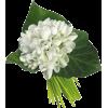 Flowers Plants White - Piante -