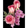 Flowers Plants Pink - 植物 -