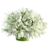 Flowers Plants White - Pflanzen -
