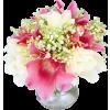 Flowers Plants Colorful - Rośliny -
