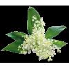 Flowers Plants White - Biljke -