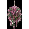 Flowers - Piante -