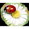 Flowers - Illustrations -