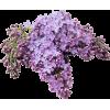 Flowers lilac - Pflanzen -