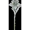 Flower stem - Plants -