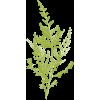 Foliage - Plantas -