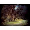 Forest - Natur -