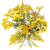 Forsythia - Plants -