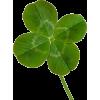 Four Leaf Clover - Plantas -