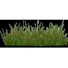 GRASS - ベルト -