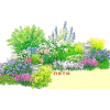 Garden flowers - Ostalo -
