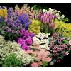 Garden tube - Plantas -