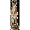 Merkat - Zwierzęta -