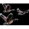 Geese - Animais -