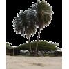 Palm tree - Nature -