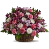 cvijeće iz vrta - Plants -